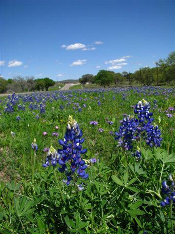 pretty flowers_texas