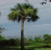 palm-tree-2